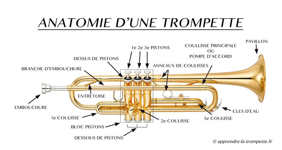 Les différentes parties de l'anatomie d'une trompette à pistons